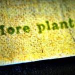 2010 07 03 moreplants