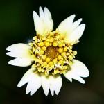 2010 06 24 flower